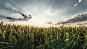 Climate Change: Biobased solutions can lead a course correction