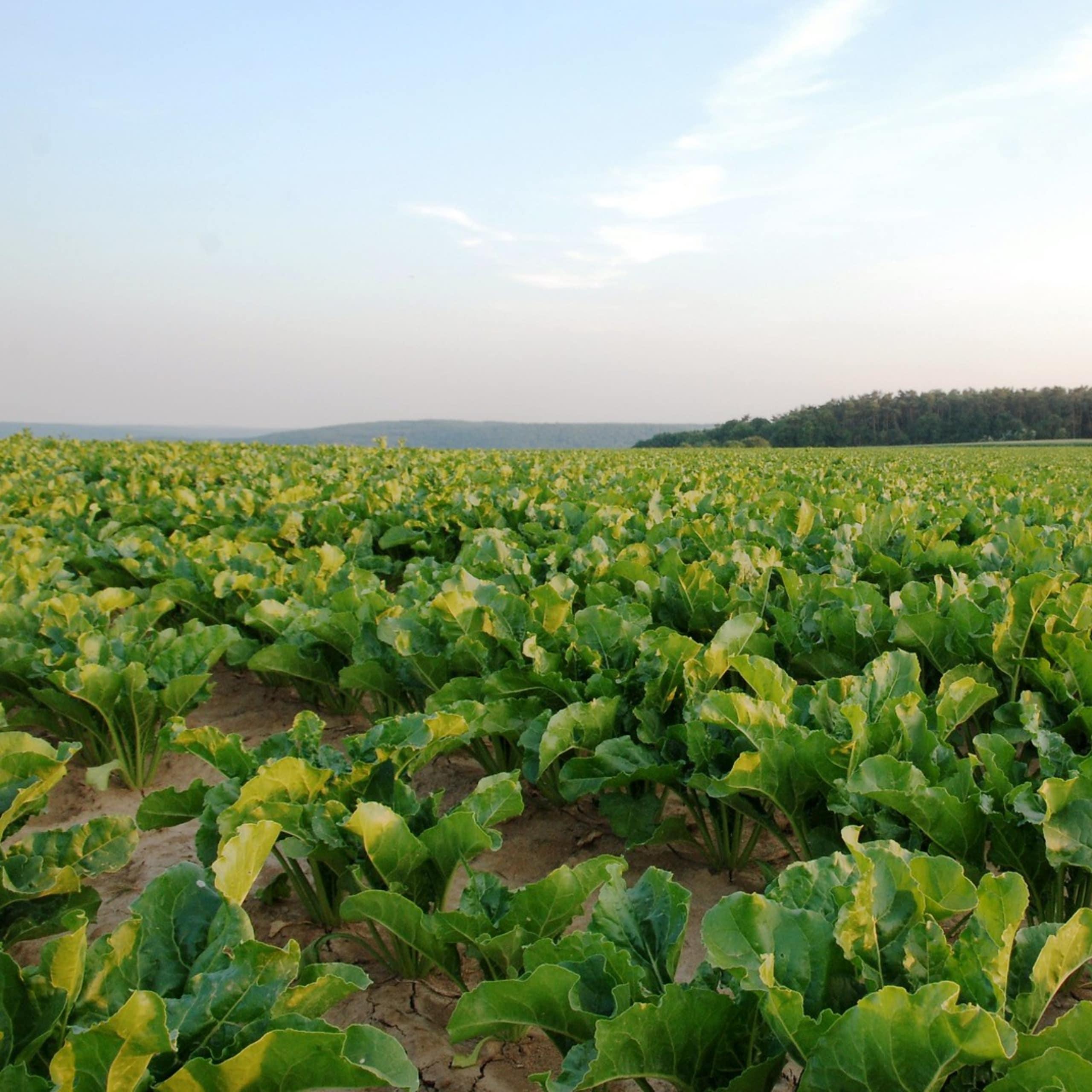Des produits biosourcés, l'avenir des industriels